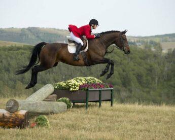 Equestrian Blog — Part 2
