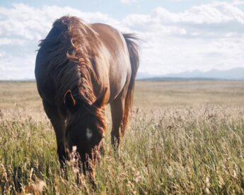 Equestrian Blog — Part 1
