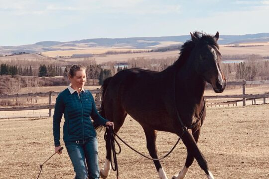 Equestrian Tool Kit Level One — Awareness of Horse & Self